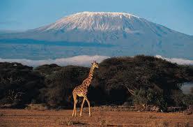 over de kilimanjaro